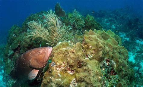 ecological tortugas reserve marine successes sanctuary television highlights studying researchers zones habitats documented positive effects keys florida