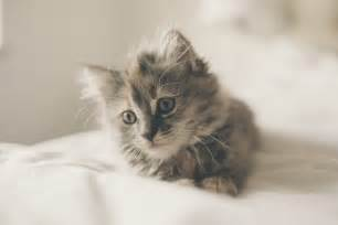 cat price photo gratuite chaton mignon cat des animaux image