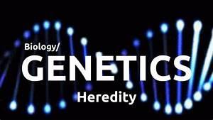 9th Grade Biology  Genetics - Heredity
