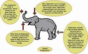 Question One - How Do Animals and Humans Evolve and Adapt ...
