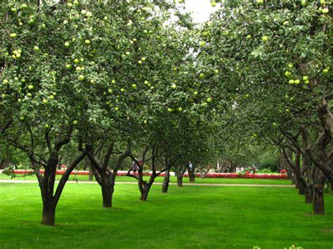 apricot garden