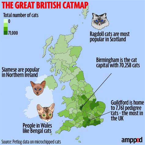 Cat Map Of Britain Where's The Most Catcrazy Place In
