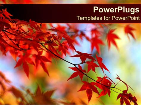 powerpoint template red leaves  orange tree  autumn