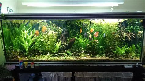 equipement aquarium eau douce troc echange aquarium eau douce 850 litres sur troc