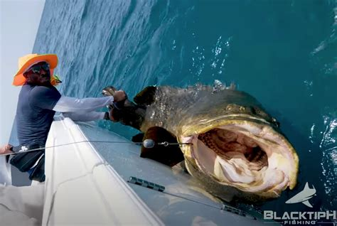 grouper dix goliath haha clinton