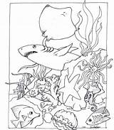Habitat Coloring Animal Pages Pond Desert Animals Ocean Wildlife Getcolorings Printable Print Sheets Fish Loaves Getdrawings North Colorings sketch template