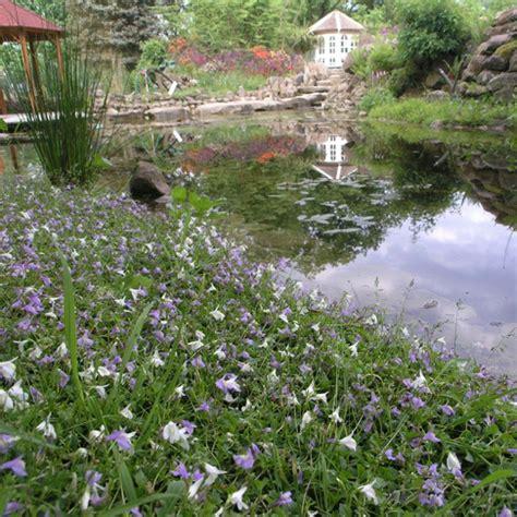 Pflanzen Für Hangbefestigung by Naturagart Shop Uferteppich Inkl Ufermatten