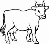 Coloring Cow Printable Animal Place sketch template