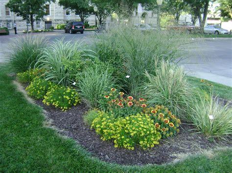 ornamental grass landscape riley county extension blog ornamental grasses