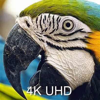 4k 3d Uhd51a Optoma Screen Pixels Projector