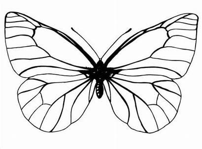 Gambar Kupu Mewarnai Butterfly Coloring Printable Hitam