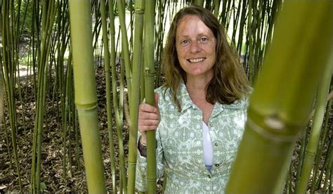bamboo plants nyc a cane the world can lean on new york times