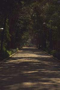 Free, Images, Dark, Shady, Walk, Nature, Path, Tree, Infrastructure, Sky, Forest, Light, Plant