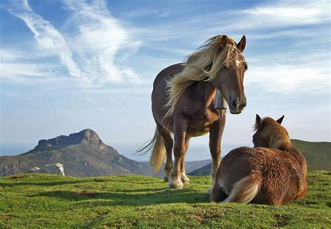 domestic horses horse ukraine appeared wild kazakhstan ancestor tamed russia asia east animals