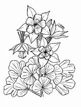 Coloring Columbine Flowers Flower Fleurs Printemps Colorier Printable Muguet Recommended Zentangle Sheets Adult Mycoloring sketch template