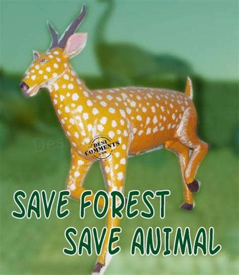 save forest save animal desicommentscom