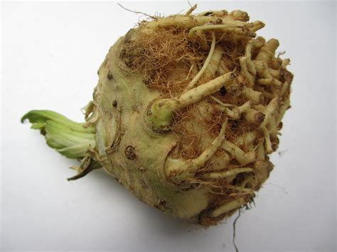 Celeriac Facts, Health Benefits And Nutritional Value