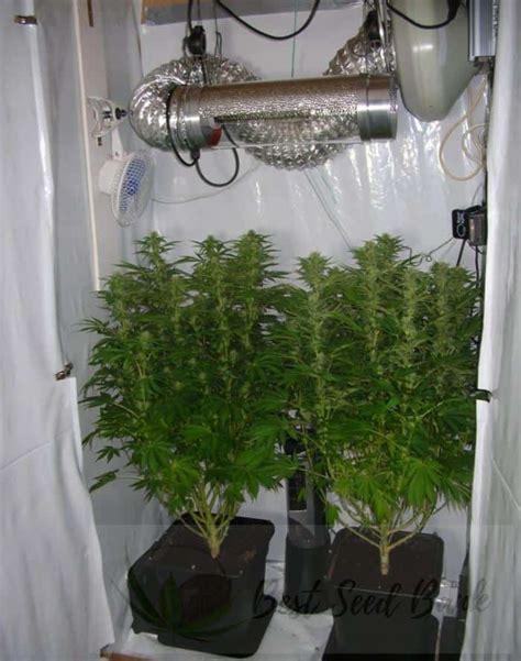 cannabis grow tent cannabis grow tent  air cooled light