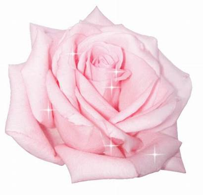 Rose Animated Pink Glitter Flower Gifs Roses