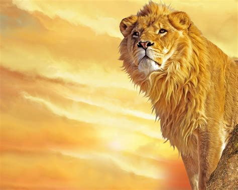 lion wallpapers  desktop quotes wallpapers