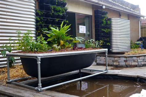 bathtub aquaponics installed planting day   rooftop