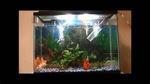 37 Gallon Goldfish Tank Water Change
