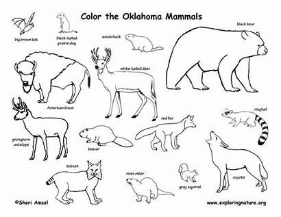 Oklahoma Mammals Amphibians State Reptiles Birds Coloring