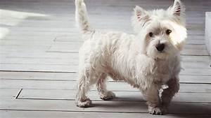 Pedigree Dog Food Feeding Chart 10 Best Healthiest Dog Food For Westies In 2020