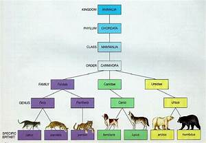 Animal Kingdom For Kids Classification Chart