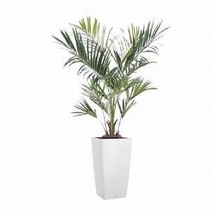 Palmier Artificiel Gifi : palmier artificiel plante artificielle plante d corative palmier ~ Teatrodelosmanantiales.com Idées de Décoration