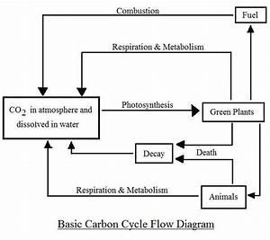 Simple Carbon Cycle Diagram