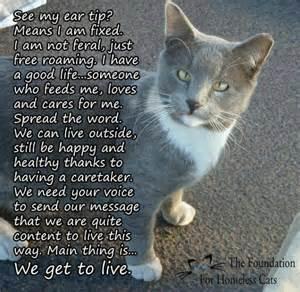 tnr cats feral cats spay neuter network