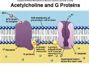 Cell Membrane Receptor Protein