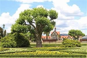Gartengestaltung Unter Bäumen : gartengestaltung unter b umen vorbereitung pflanzenwahl ~ Yasmunasinghe.com Haus und Dekorationen