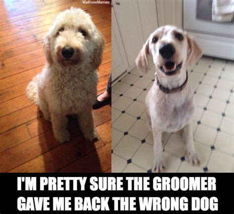 groomed darwin dogs