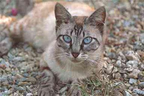 brechen bei katzen zoologie katzen