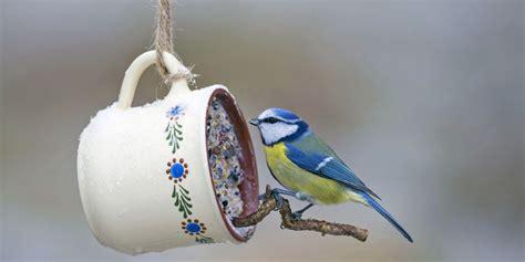 vogelfutter selbst herstellen so k 246 nnen sie vogelfutter selbst herstellen senioren ratgeber