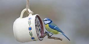 Vogelfutter Selbst Herstellen : so k nnen sie vogelfutter selbst herstellen senioren ratgeber ~ Orissabook.com Haus und Dekorationen