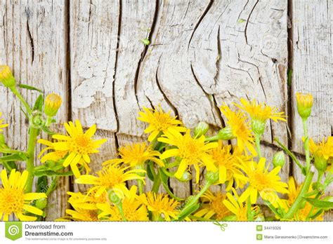 yellow flowers  wooden background royalty  stock