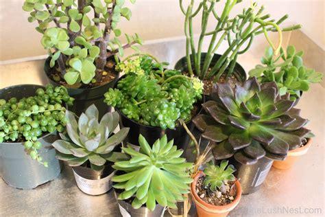indoor succulents fresh indoor succulent bowl 19357