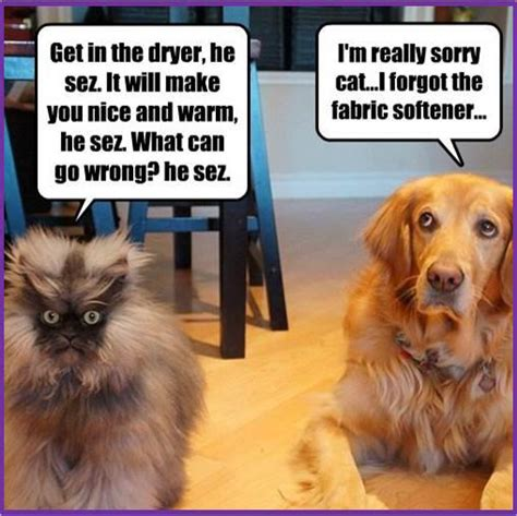 Dog Cat Meme - wormhole page 9213 oneplus forums
