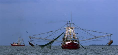 Small Boats For Sale In Alabama by Warmer Water Than Usual Prompts Opening Of Shrimp Season