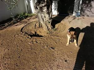 Hund Im Garten Vergraben : auf den hund gekommen z une l cher und mehr ~ Lizthompson.info Haus und Dekorationen