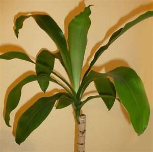 Yucca Palme Garten : yucca palme ~ Lizthompson.info Haus und Dekorationen