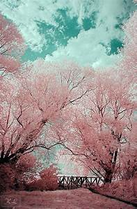 japanese cherry blossom | Tumblr | ZEN!! | Pinterest