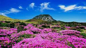 Jeju Island: South Korea's Most Underrated Paradise ...