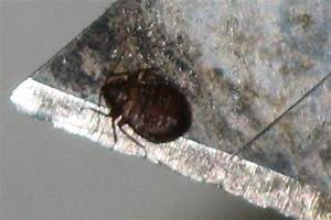 bed bug infestation pest control tulsa 918 252 3548 With bed bugs tulsa