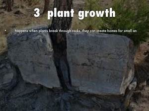 Plant Growth Mechanical Weathering