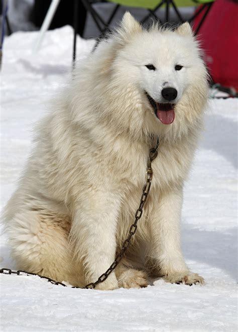 Free Images Landscape Nature Snow White Animal Fur