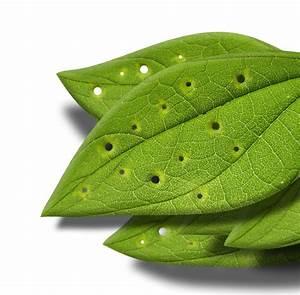 Stickstoffmangel Bei Pflanzen : mangelerschei nungen bei wasserpflanzen ~ Lizthompson.info Haus und Dekorationen